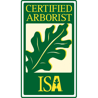 Why Hire a Certified Tree Care Expert For Spring Tree Care?