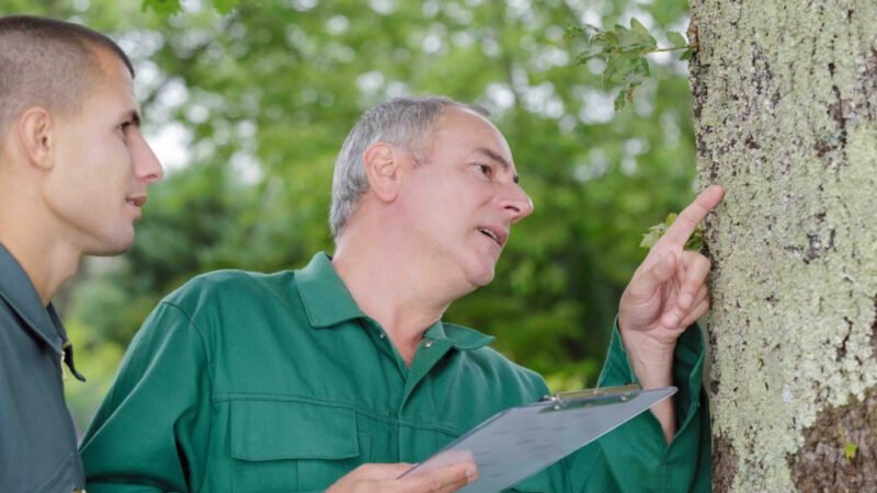 Is It Time to Call Spring Tree Services?