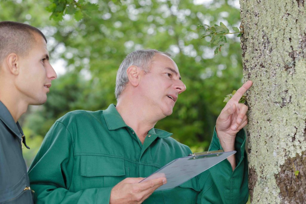 spring tree inspections, spring tree inspection