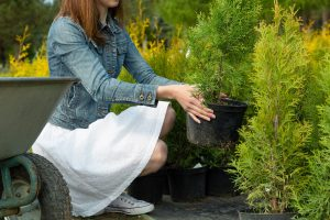 Choosing a Tree for Your Landscape